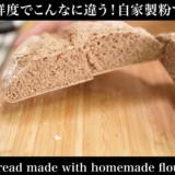小麦の鮮度はパンにどんな影響かあるのか比較してみた。